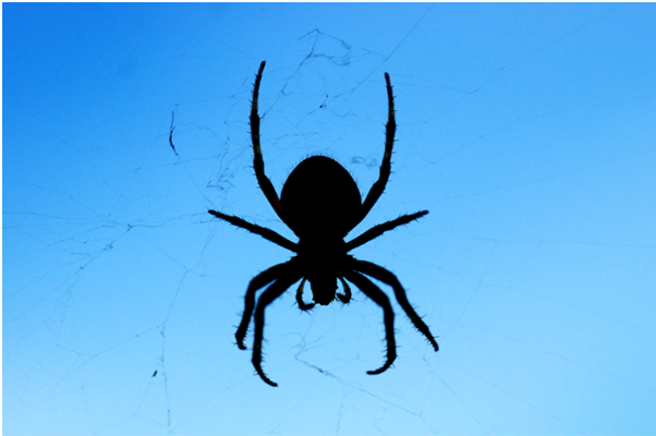 Escribir para las arañas